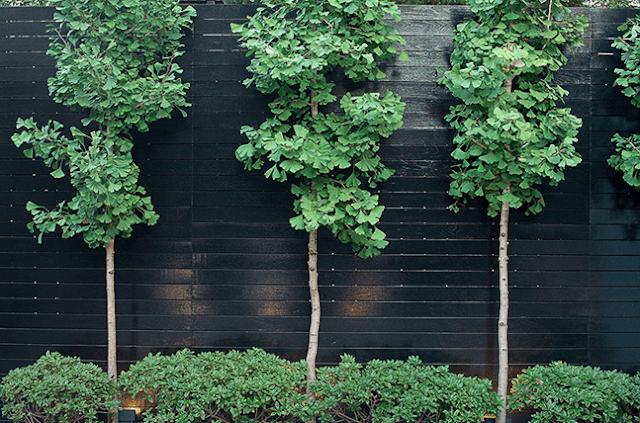 شركة تنسيق اشجار بالرياض